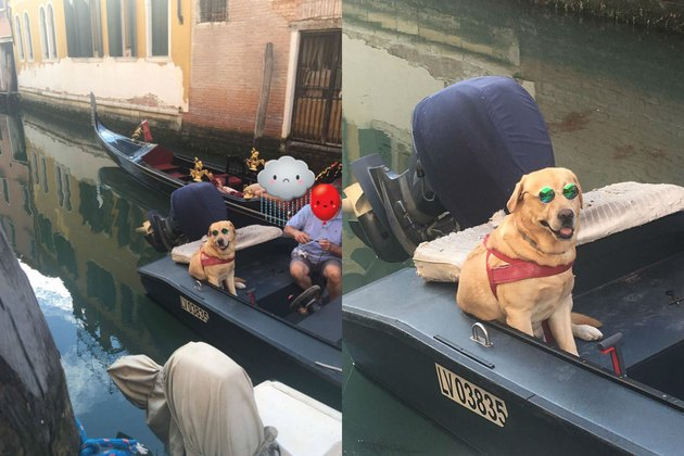 dog rocks sunglasses on boat in Venice canal