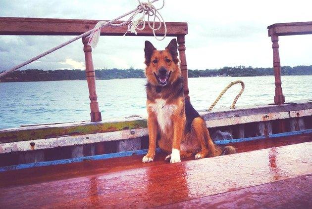 dog captains boat in Kenya