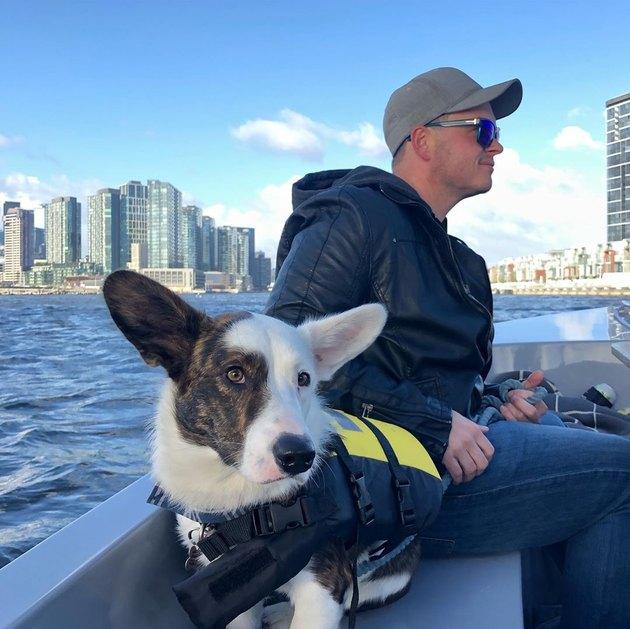corgi in life jacket sails in Australian harbor