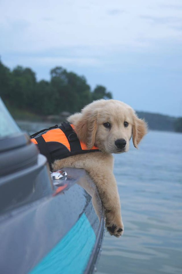 puppy in lifejacket lets paws drape over side of boat