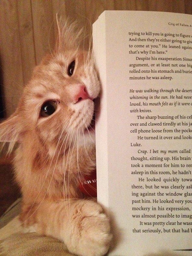 Cat biting book