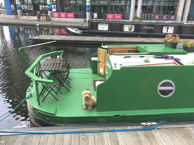 dog poses for picture on river barge