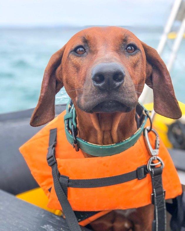 dog in life jacket on boat