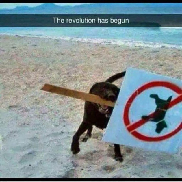 dog holds no dogs allowed sign in mouth