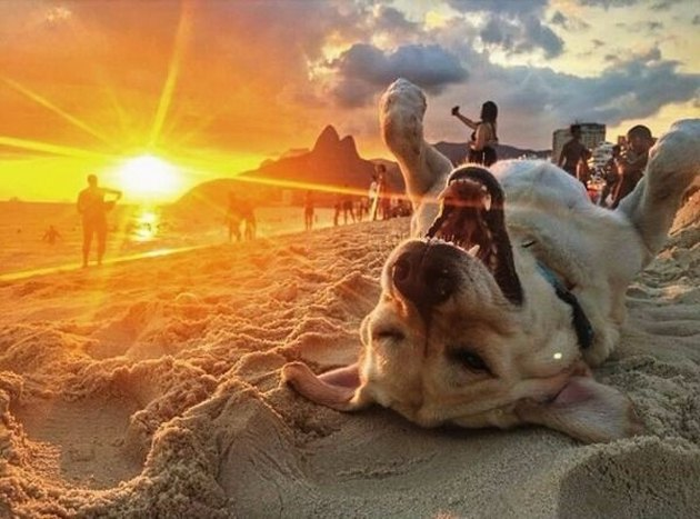 Dog lying on its back on the beach while the sun sets.