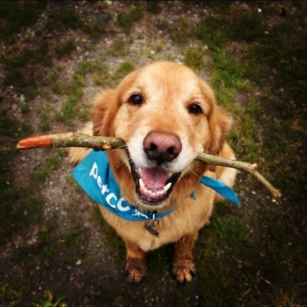 Good boy with a stick