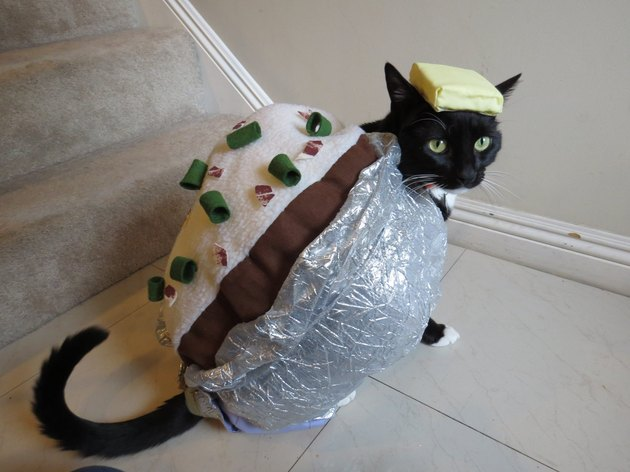 Cat dressed up like a baked potato