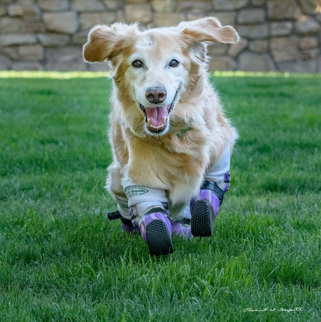 Plastics make it possible: Pets living their best lives thanks to prosthetics