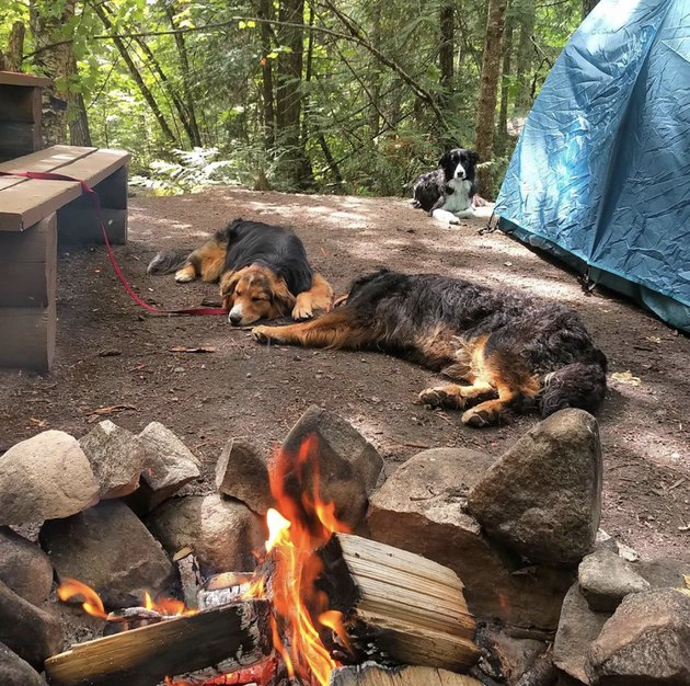 three dogs by a campfire