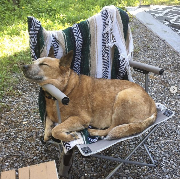 dog sleeping in camp chair