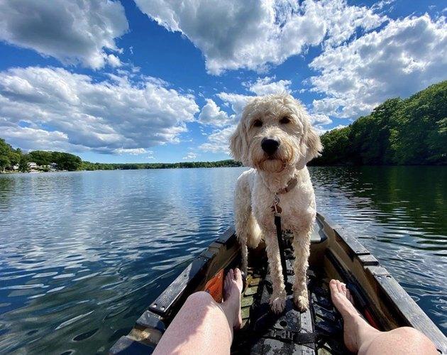 dog on a kayak