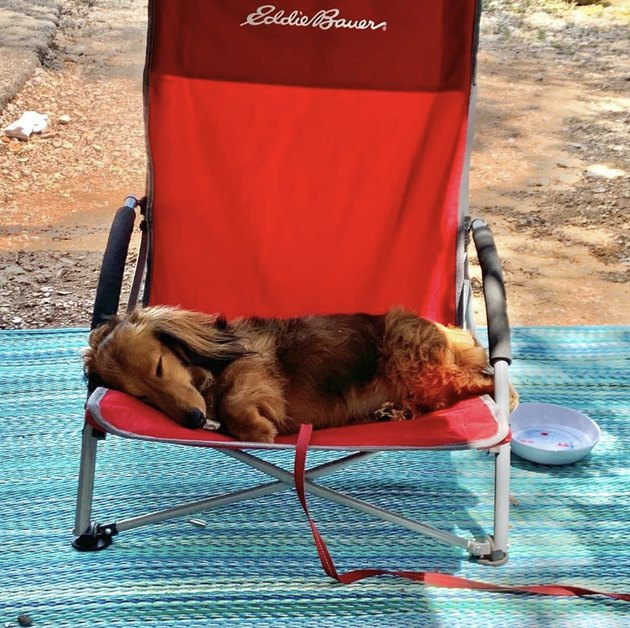 dog sleeping in red camping chair