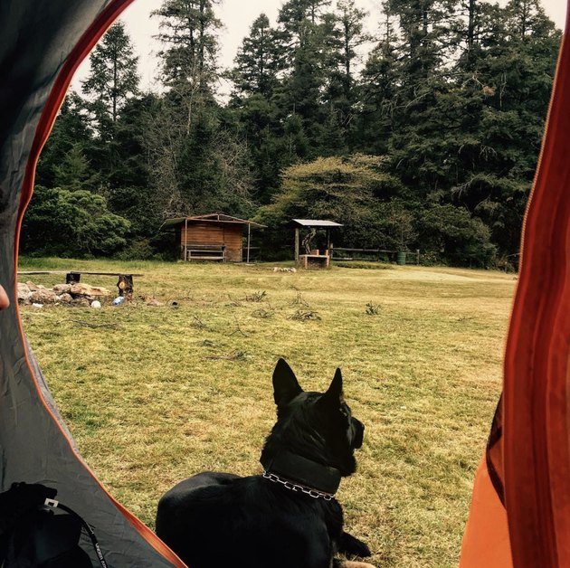 dog sitting outside tent
