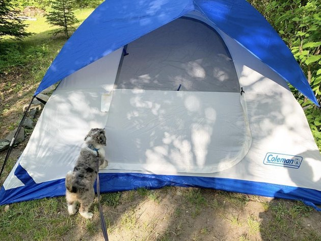 dog outside a tent