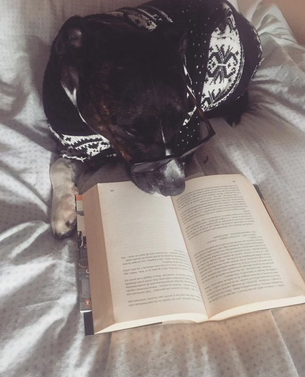 dog reading a novel in bed