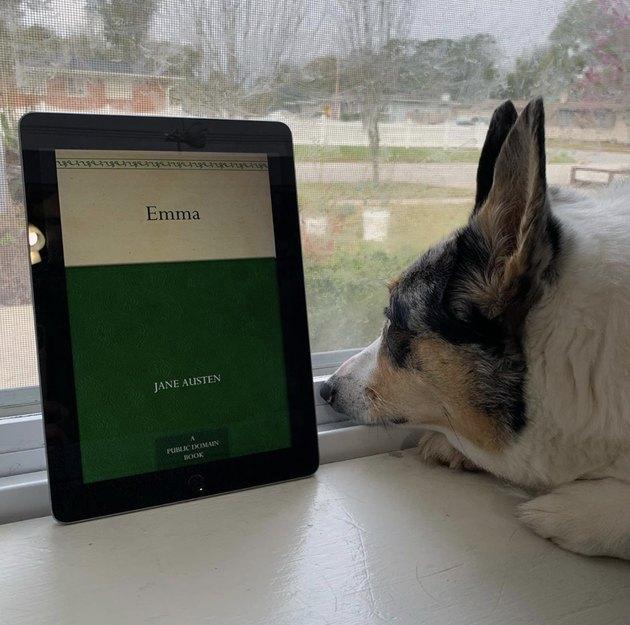 dog reading emma on kindle