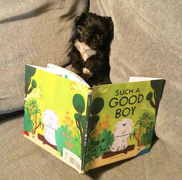 dog reading such a good boy