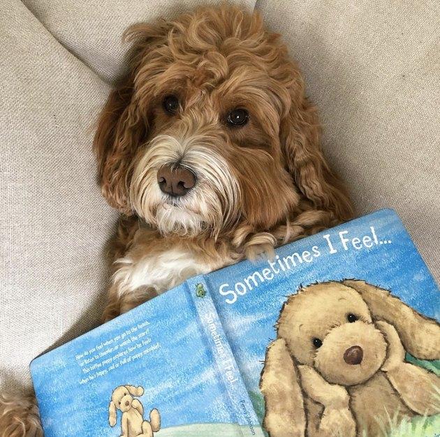 dog reading sometimes i feel...