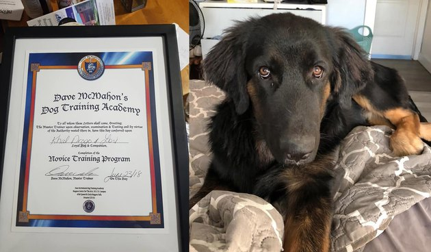 Canadian mom frames dog's diploma