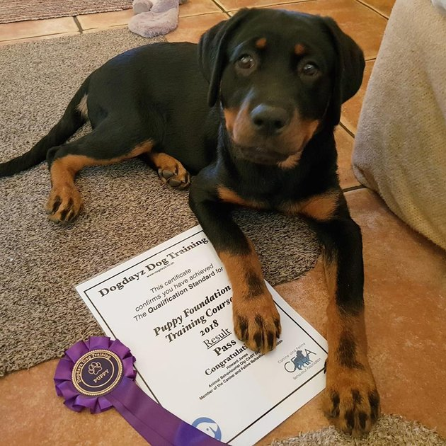 doberman graduates from training course