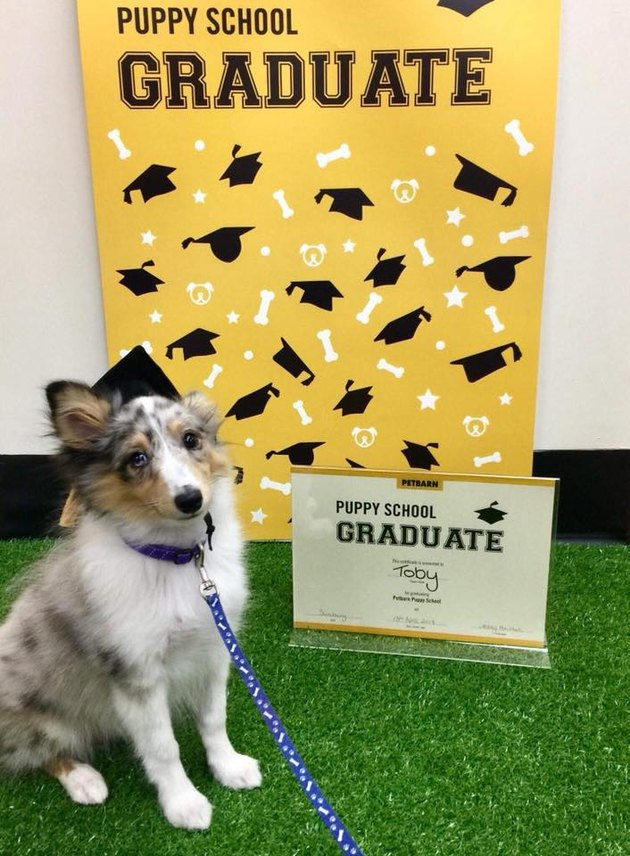 Puppy poses for picture with diploma