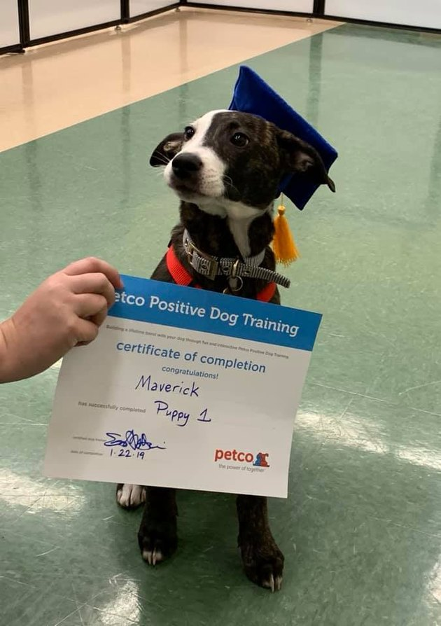 Puppy poses with certificate of completion