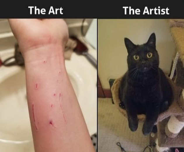 cat scratches human's wrist