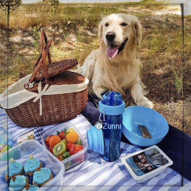 golden retriever sitting beside a picnic basket