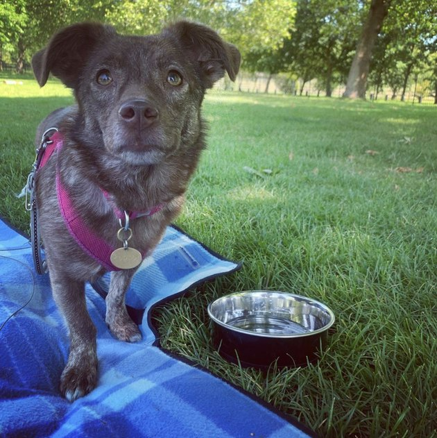 dog on blue picnic blanket