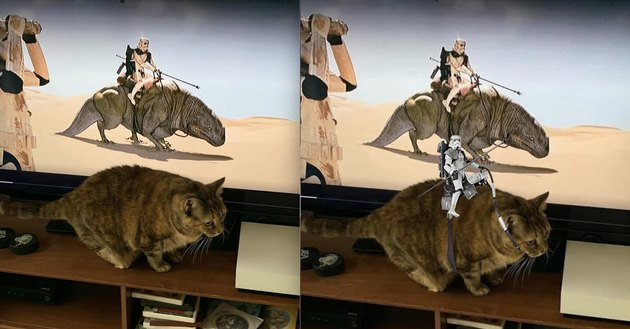 cat photoshopped with stars wars stormtrooper