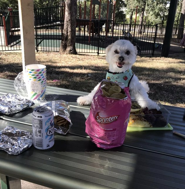 dog sitting at picnic table with snacks