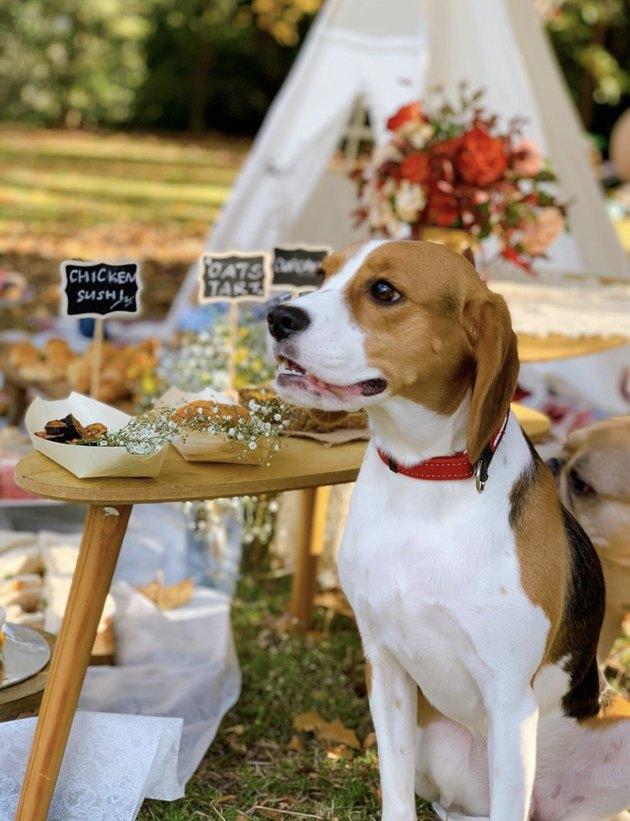 dog sitting by snacks