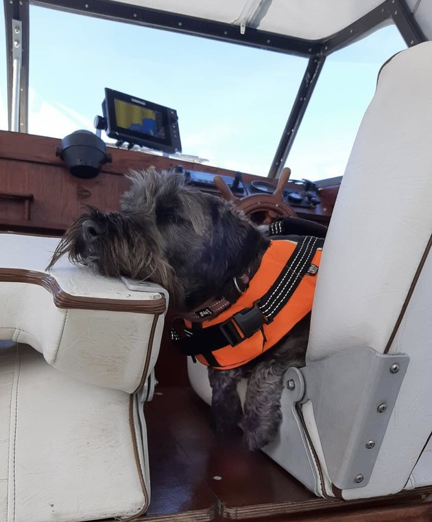 dog in the captain's seat