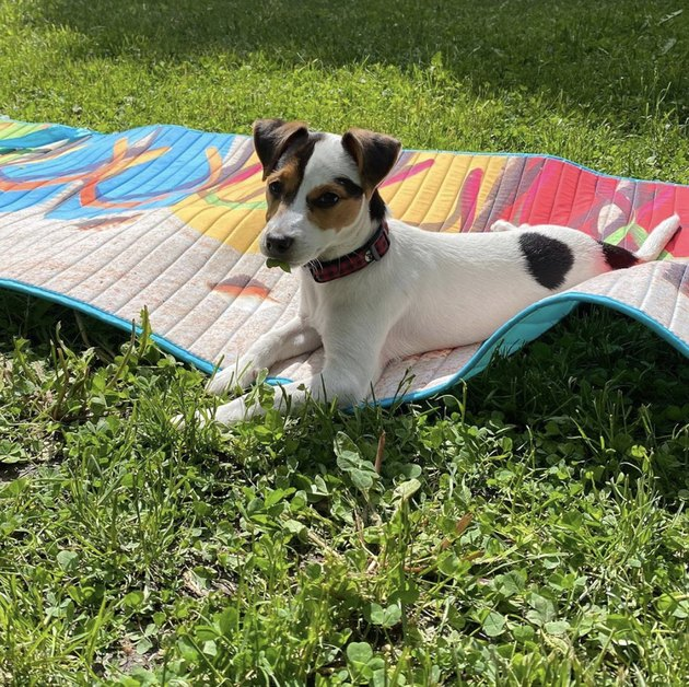 dog on a colorful blanket