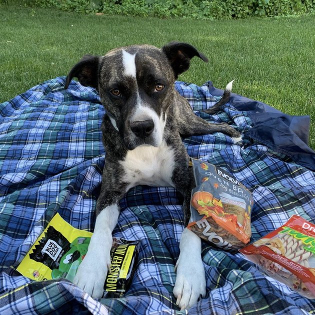 dog with snacks on picnic blanket