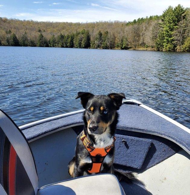 dog inside motorboat