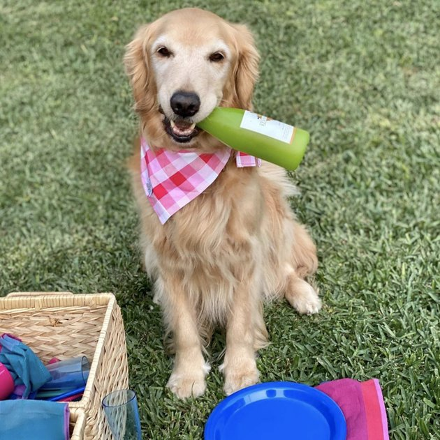 dog with champagne bottle in mouth