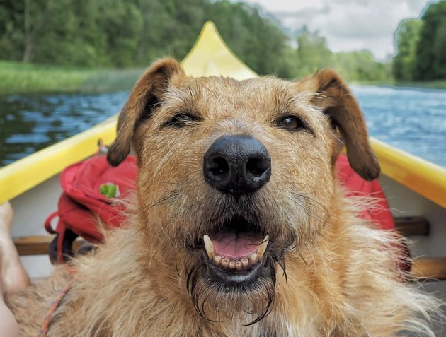 dog inside a yellow kayak