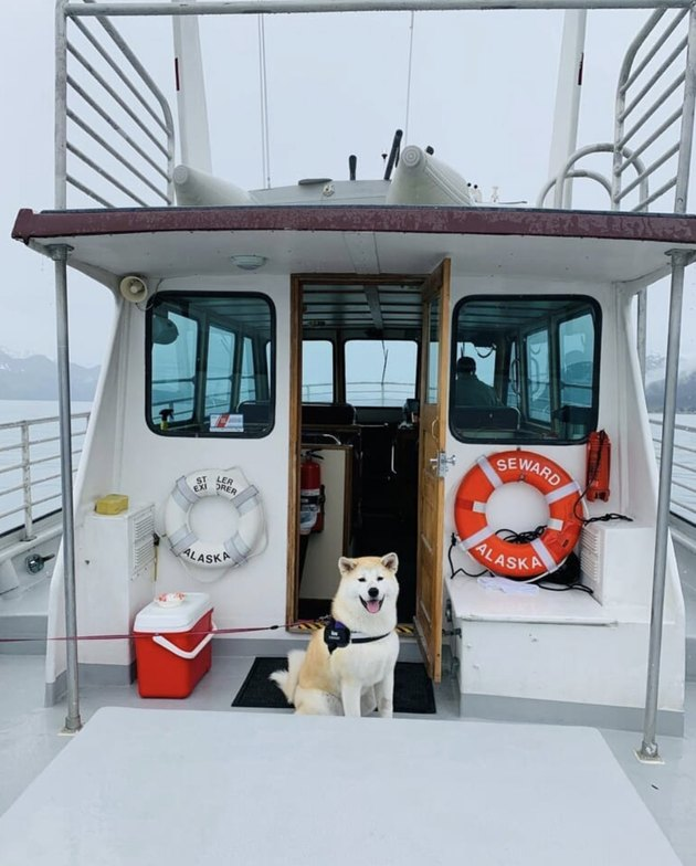 dog on a small yacht
