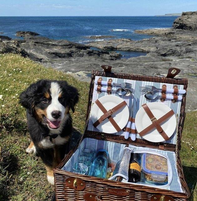 dog sitting next to huge picnic basket