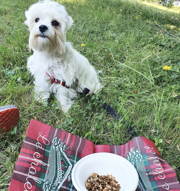 dog in the grass with bowl of treats