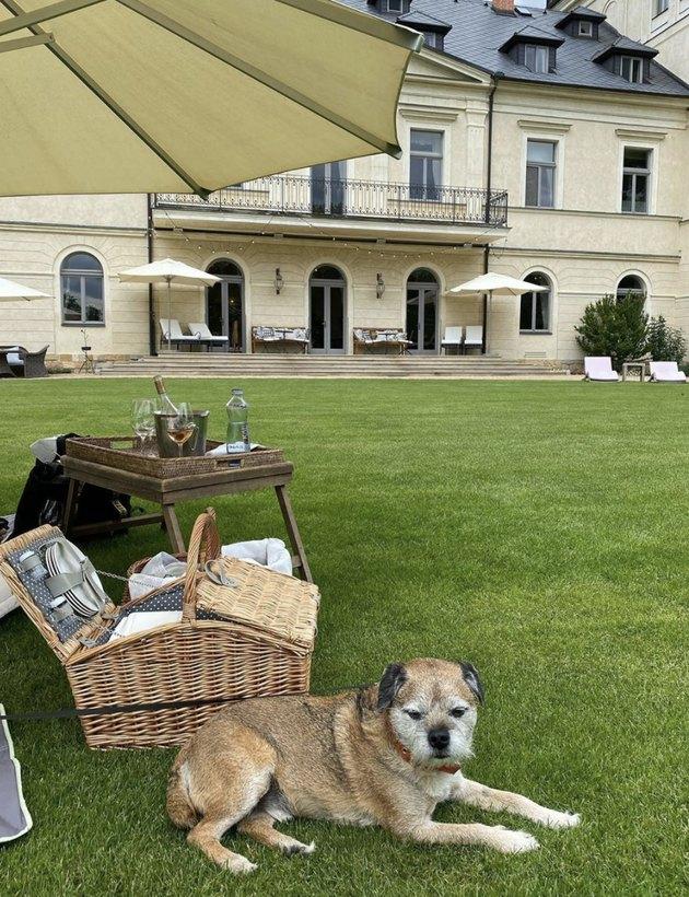 dog sitting by huge picnic basket