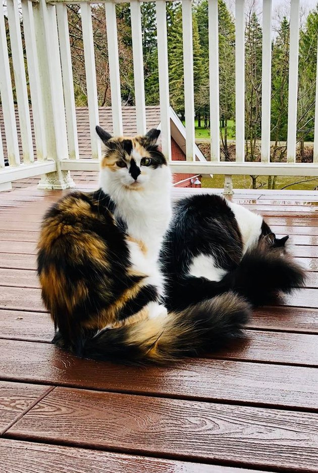 cats on wet porch
