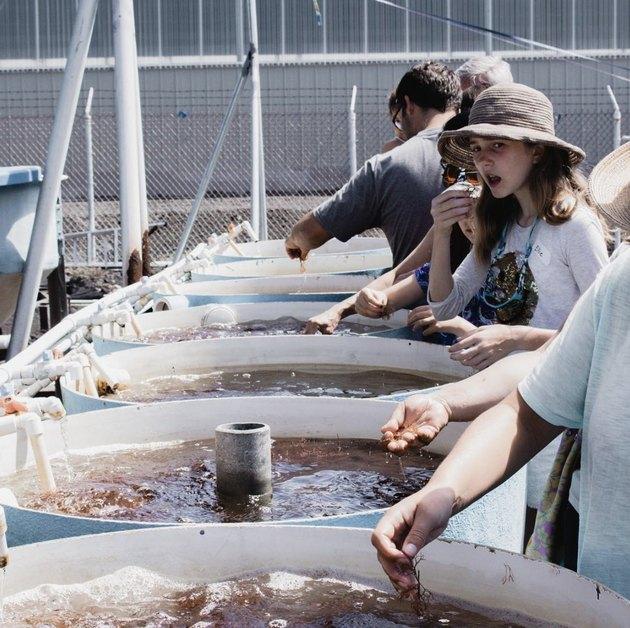 visitor gasps at Hawaiian seahorse farm