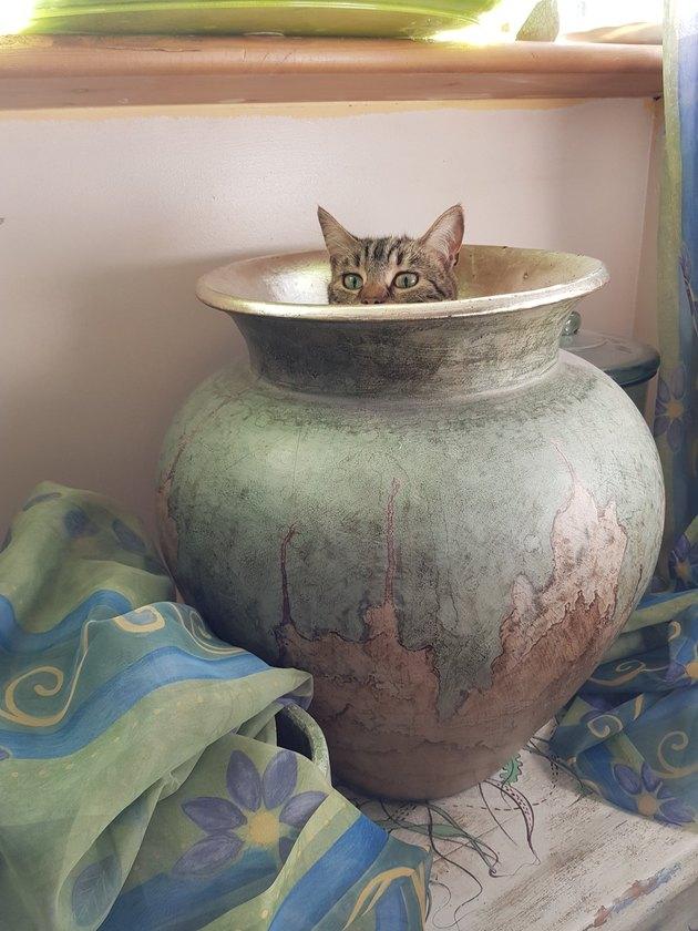 cat in vase