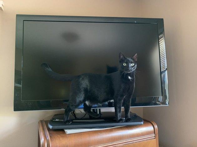 black cat in front of tv
