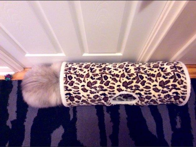 cat hides poorly