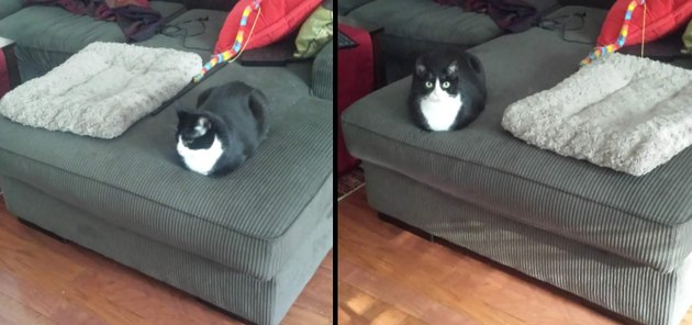 Cat sitting on ottoman next to cat bed.