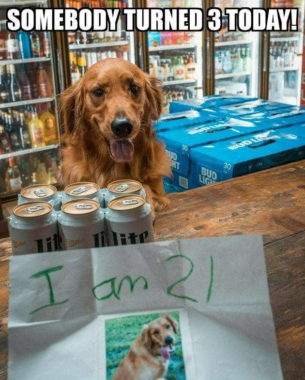 Dog attempting to buy beer.