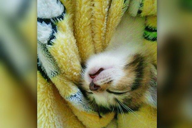 so much sleeps